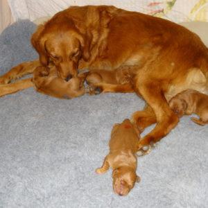 Pups 12.10.19_1