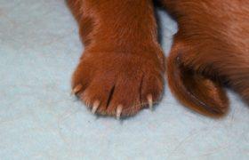 Pups 15.10.19