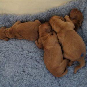 Pups 12.10.19